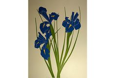 Irises by Henry   Evans on OneKingsLane.com