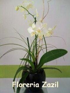 "https://flic.kr/p/thAiNa | Orchids | Orquideas en maceta, un hermoso regalo! <a href=""http://www.floreriazazil.com"" rel=""nofollow"">www.floreriazazil.com</a>"