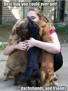 dachshunds are the best huggers