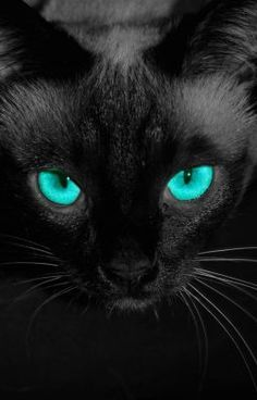 #wattpad #paranormal In this, you'll meet a strange alley cat in the beginnings of the night where anything may happen. It starts off normal enough, but when something different happens, it may change up the night and give entertainment to a bored animal. Complete with dire quest to aid one and destroy another. Once yo...