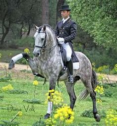Dapples + Dressage= wow - WOW, ME TOO.  AMAZING TO WATCH DRESSAGE