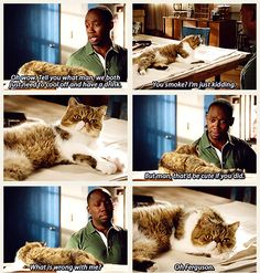 Winston Bishop, The New Girl. Seriously, the funniest character on the show, and his cat Ferguson is adorable. New Girl Memes, New Girl Funny, New Girl Quotes, The Funny, Nick Miller, Parks N Rec, Parks And Recreation, New Girl Tv Show, Jessica Day