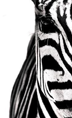 This zebra says it best!... ~✭~ ♥♥