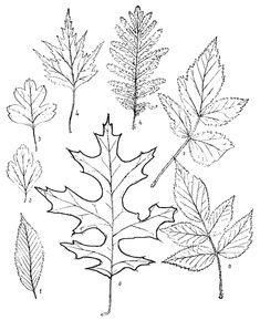http://www.scrollsawwoodpatterns.com/wp-content/uploads/2011/11/leaves.jpg