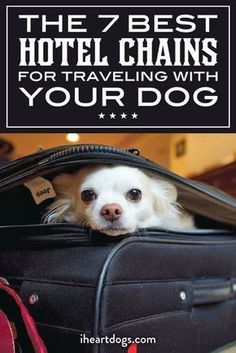 The Top 7 Hotel Chains For Traveling With Your Dog Traveling with your pup? Try these pup friendly spots! Road Trip With Dog, Dog Friendly Hotels, Wanderlust, Cat Dog, Dog Travel, Travel Tips, Travel Hacks, Roadtrip, Training Your Dog