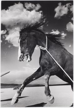 Ernst Haas, Mustang on the set of The Misfits, 1960