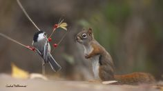 That red is very nice on you Berry by Andre Villeneuve on 500px