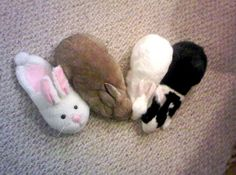 One of these bunnies is not like the others.