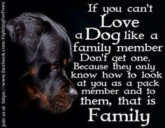 So true. They are soooooo much more than a pet. They are family and they deserve to be spoiled.