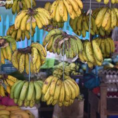 Stop hanging around like a bunch of bananas and go get that qualification. We offer onsite and online courses to suit all sorts of learners. Tefl Certification, Teaching English, Online Courses, Bananas, Islands, Thailand, Asia, Explore, Adventure