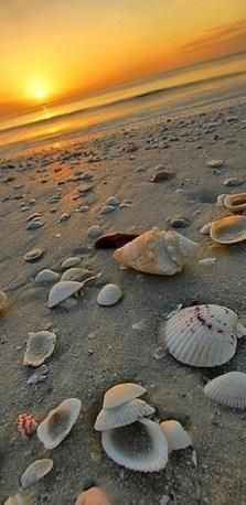 """""""In some parts of the world, sands represent the remains of plants that in life had lime-hardened tissues, or fragments of the calcareous shells of sea creatures.""""~Rachel Carson"""