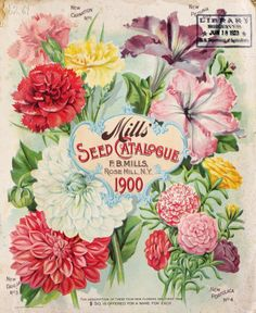 Front cover of Mills' Seed Catalogue 1900 with an illustration of Carnations, Dahlias, Petunias and Portulaca.F. B. Mills. Rose Hill, N. Y.U.S. Department of Agriculture, National Agricultural Libraryarchive.org