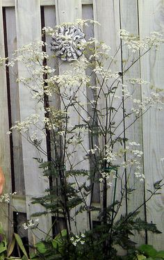 Full shade 4 to 5 feet tall Blooms summer Leaf Flowers, White Flowers, Garden Inspiration, Garden Ideas, Round Border, I Go Crazy, Variegated Plants, Flower Names, Foliage Plants