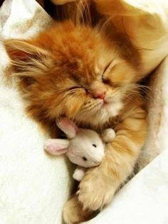 Cute kitten taking a little nap with his bunny toy.  Sweet!