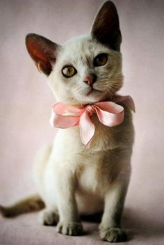 Pretty girl dressed in pink!