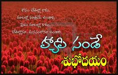 Happy Sunday Images Best Telugu Good Morning Quotes Pictures for Whatsapp Good Morning Janu, Happy Sunday Images, Motivational Good Morning Quotes, Sunrise Quotes, Good Afternoon Quotes, Good Morning Images Download, Whatsapp Status Quotes, Hd Quotes, Facebook Image