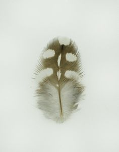 Studies of Australian feathers by Jared Fowler, via Behance