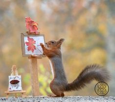 Funny Christmas Pictures Animals Friends 37 Ideas For 2019 Squirrel Pictures, Funny Animal Pictures, Cute Pictures, Animals And Pets, Baby Animals, Funny Animals, Cute Animals, Wild Animals Photography, Funny Christmas Pictures