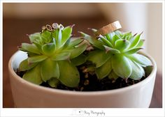Seattle Wedding Photographer Engagement ring photo, wedding ring, succulents