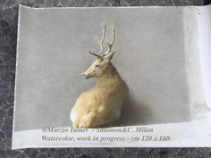 @Marzio Tamer, Deer (work in progress)  watercolor, cm 120 x 160 The Italian contemporary artist deals with wildlife art genre in a personal and recognisable way #realism #wildlife #hunter. This artwork is going to be finished in few days of work...