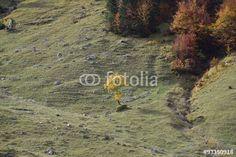 Herbstfarben in den Alpen