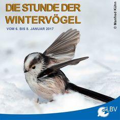 Die Stunde der Wintervögel 2017 ist nicht mehr weit! Nehmt euch in der Zeit vom 6. bis 8. Januar 2017 eine kleine Auszeit für die Natur. Genießt eine Stunde lang den entspannenden Anblick der Vögel und meldet uns die Arten plus Anzahl die ihr gesehen habt. Die Teilnahme ist einfach und jeder kann mitmachen ob als Familie Gruppe oder alleine. So helft ihr neues Wissen über Natur und Vögel zu gewinnen und zu gewinnen gibt es auch etwas. Macht mit!  #stundederwintervögel #winter #vogel #vögel…