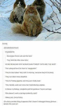FUCK NOW IM IMAGINING THE ORANGE CAT WITH A VIKING HELMET. IT LOOKS LIKE A FUCKIN GOD