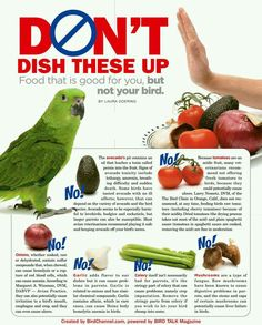 Do Not Feed: does and do not when it comes to bird feeding.
