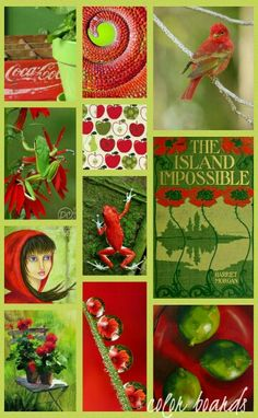 RED AND GREEN MOODBOARD ~ COLLECTION OF COLORS ~~