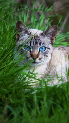 Cat Resting in the Grass. Water Aerobic Exercises, Cat App, Domestic Cat, Pretty Cats, Beautiful Creatures, Neko, Panther, Cats And Kittens, Cat Lovers