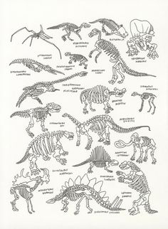 Dinosaurs at The American Museum of Natural History, by Jason Polan - 20x200 (from $60)