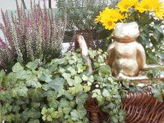 Quakenbrück: Maskottchen Frosch