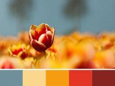 modern interior colors, orange color schemes: Bright orange color scheme with pastel blue and brown colors