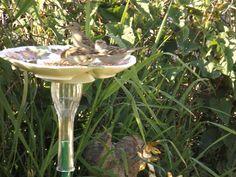 sparrows on a birdfeeder I made