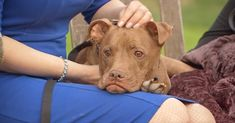 The poor dog was the definition of pain and misery as he was found with a broken tail, 12 missing teeth, and weighing only 18 pounds in total. Missing Teeth, Big Battle, Give Hope, Poor Dog, Dog Stories, Sick Kids, Rescue Dogs, Pitbulls, Pit Bulls