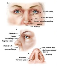 nose anatomy diagram - Google Search
