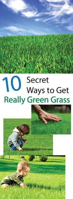 How To Get And Keep Your Grass Green – Making DIY Fun