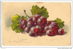Divided Back Postcard Grapes in Still Life Fruit Catherine Klein, Grape Painting, Fruit Painting, Still Life Flowers, Still Life Fruit, Botanical Prints, Floral Prints, Watercolor Fruit, Fruit Art