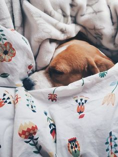 Interesting Beagle Friendly Loyal And Loving Ideas. Glorious Beagle Friendly Loyal And Loving Ideas. Animals And Pets, Baby Animals, Funny Animals, Cute Animals, Cute Puppies, Cute Dogs, Dogs And Puppies, Doggies, Tier Fotos