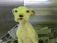 www.PetHarbor.com pet:LACT2.A1504846