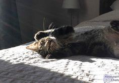 Uun chat heureux en appartement, c'est tout notre amour, de la stimulation, et surtout le respect d'un territoire (SON territoire) bien organisé !