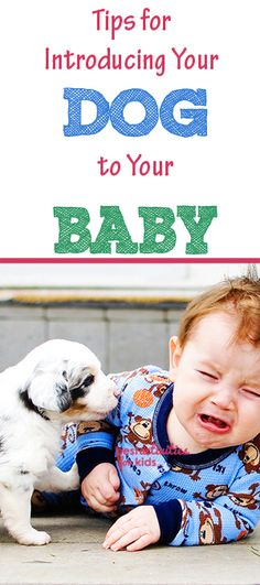 Tips for Introducing your dog to your baby- great tips