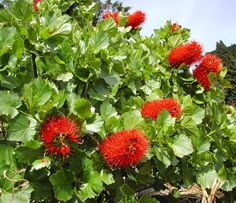 South african plants and trees - photo#22