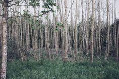 Row of trees