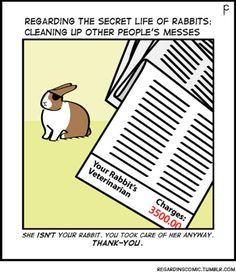 RX or reality! #rabbit #bunny #bunnies #vetbill