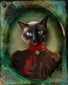 Siamese Cat Photo - Animal Photography Portrait - Victorian Animal Cat Collage - Gift for Cat Lovers - 8x10 Print - Young Lady of Shetland