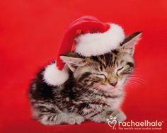 kitten with a Santa hat on