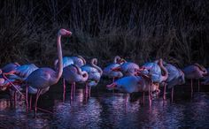 Flamingoes at Dawn by Lele Bissoli on 500px