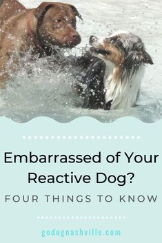 Have a reactive dog? You'll know what I'm talking about. And if you don't, you'll probably be judging us like a bad haircut. Here's the inside scoop Therapy Dog Training, Puppy Training Tips, Best Dog Training, Reactive Dog, Dog Best Friend, Herding Dogs, Dog Hacks, Dog Agility, Happy Animals