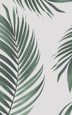 Create a cool minimalist style that's bang on trend with this fresh tropical palm leaves wallpaper, a contemporary mural. Leaves Wallpaper Iphone, Palm Wallpaper, Tropical Wallpaper, Modern Wallpaper, Aesthetic Iphone Wallpaper, Aesthetic Wallpapers, Wallpaper Murals, Bohemian Wallpaper, Plant Painting
